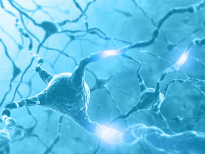 Neurons Building Memory and Concentration